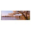 iCanvasArt Panoramic Cherry Blossom Tree Along a Lake, Potomac Park, Washington, D.C Photographic Print on Canvas