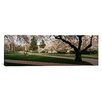 iCanvasArt Panoramic Cherry Trees in the Quad of a University, University of Washington, Seattle, King County, Washington State Photographic Print on Canvas
