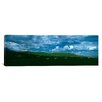 iCanvasArt Panoramic Charolais Cattle Grazing in a Field, Rocky Mountains, Montana Photographic Print on Canvas