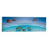 iCanvas Bottlenose Dolphin Jumping While Turtles Swimming Under Water on Canvas