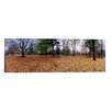 iCanvasArt Panoramic Central Park, Manhattan, New York City Photographic Print on Canvas