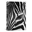 iCanvas 'Zebra Stare' by Bob Larson Photographic Print on Canvas
