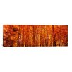 iCanvas Panoramic Aspen Trees at Sunrise Photographic Print on Canvas
