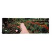 iCanvas Panoramic International Rose Test Garden, Washington Park, Portland Photographic Print on Canvas