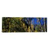 iCanvas Panoramic Maroon Bells, Aspen, Pitkin County Photographic Print on Canvas