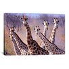 iCanvas Giraffes by Pip McGarry Painting Print on Canvas