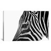 iCanvas 'Ignoring Zebra' by Bob Larson Photographic Print on Canvas