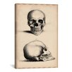 iCanvasArt Cartography 'Human Skull Engraving' by William Miller Graphic Art on Canvas
