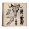 "iCanvas ""Goat Head Anatomy"" Canvas Wall Art by Wilhelm Ellenberger and Hermann Baum"