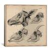 "iCanvas ""Goat Head Skeleton Anatomy"" Canvas Wall Art by Wilhelm Ellenberger and Hermann Baum"
