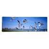 <strong>iCanvasArt</strong> Panoramic Flock of Seagulls Flying on the Beach, New York State Photographic Print on Canvas