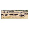 iCanvas Panoramic Herd of Wildebeests Running in a Field, Tanzania Photographic Print on Canvas