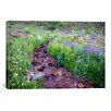 iCanvas Field of Beauty l' by Dan Ballard Photographic Print on Canvas