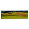 iCanvas Panoramic Field of Corn Crops, Baltimore, Maryland Photographic Print on Canvas