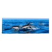 iCanvas Panoramic 'Common Dolphins Breaching in the Sea' Photographic Print on Canvas
