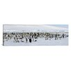 iCanvas Panoramic Emperor Penguins at Snow Hill Island, Antarctica Photographic Print on Canvas