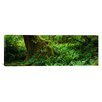 iCanvasArt Panoramic Hoh Rainforest, Olympic National Forest, Washington Photographic Print on Canvas