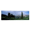 iCanvas Panoramic 'Forest, Washington Gulch Trail, Crested Butte, Gunnison County, Colorado' Photographic Print on Canvas
