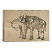 iCanvas 'Comparative View of the Human and Elephant Frame' on Canvas