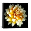 "iCanvas ""Dahlia"" Canvas Wall Art by Susan Barmon"