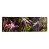 iCanvas Panoramic Details of Furry Flowers Photographic Print on Canvas
