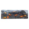 iCanvas Panoramic Sally Lightfoot Crabs on a Rock, Galapagos Islands, Ecuador Photographic Print on Canvas