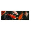 iCanvasArt Photography 'Koi Carp in Japan' Photographic Print on Canvas