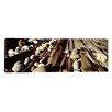 iCanvasArt Panoramic Close-up of Stones, Pemaquid, Massachusetts Photographic Print on Canvas