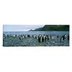 iCanvasArt Panoramic Colony of King Penguins on the Beach, South Georgia Island, Antarctica Photographic Print on Canvas