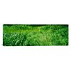 iCanvas Panoramic Grass on a Marshland, England Photographic Print on Canvas