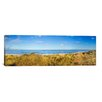 iCanvas Panoramic 'Grass on the Beach, Horsey Beach, Norfolk, England' Photographic Print on Canvas