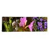 iCanvas Panoramic Details of Early Spring and Crocus Flowers Photographic Print on Canvas