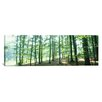 <strong>iCanvasArt</strong> Panoramic Forest Scene with Fog, Odenwald, Near Heidelberg, Germany Photographic Print on Canvas