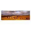 iCanvas Panoramic Buffaloes Grazing, North Dakota Photographic Print on Canvas