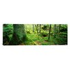 iCanvasArt Panoramic 'Close-up of Moss on a Tree Trunk in the Forest, Siggeboda, Smaland, Sweden' Photographic Print on Canvas