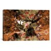 iCanvas Male Canadian Moose Graphic Art on Canvas