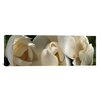 iCanvas Panoramic 'Magnolia Flowers' Photographic Print on Canvas