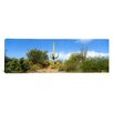 iCanvas Panoramic Tucson, Arizona Photographic Print on Canvas