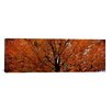 iCanvasArt Panoramic Maple Tree in Autumn, Vermont Photographic Print on Canvas