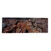 iCanvasArt Panoramic 'Marine Iguana on Volcanic Rock on Isabela Island, Galapagos Islands, Ecuador' Photographic Print on Canvas