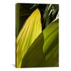 iCanvasArt 'Leaves of Green' by Harold Silverman - Foilage and Greenery Photographic Print on Canvas
