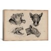 iCanvasArt Animals Art 'Lion Head Anatomy' by Wilhelm Ellenberger and Hermann Baum Painting Print on Canvas