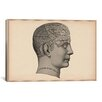 <strong>iCanvasArt</strong> Cartography 'Phrenology Human Head' Graphic Art on Canvas