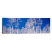 iCanvasArt Panoramic Forest, Utah Photographic Print on Canvas