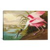 iCanvasArt 'Roseate Spoonbill' by John James Audubon Painting Print on Canvas