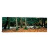 iCanvasArt Panoramic White Mountain National Forest, New Hampshire Photographic Print on Canvas