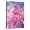 iCanvas Marine and Ocean 'Precious Pink Coral' Photographic Print on Canvas