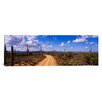 iCanvas Panoramic Road, Saguaro National Park, Arizona Photographic Print on Canvas