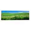 iCanvas Panoramic 'Rolling Green Hill, Palouse, Whitman County, Washington State' Photographic Print on Canvas