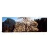 iCanvasArt Panoramic 'Yosemite National Park, California' Photographic Print on Canvas